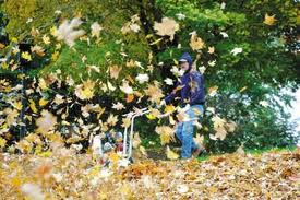 Offer leaf removal services