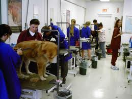 Offer dog grooming services