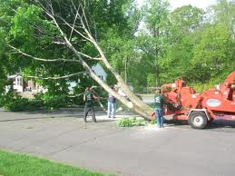 Offer tree and shrub service services