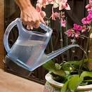 Offer plants watering service (indoor or outdoor) services